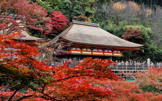 京都楓葉封面