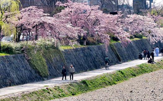 京都春天1封面