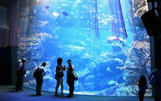 京都水族館封面