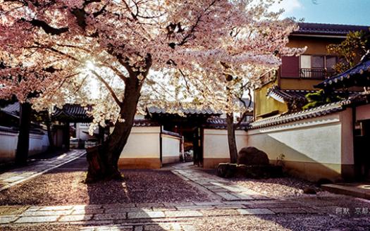 櫻花3封面